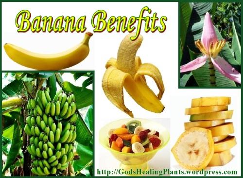 Banana GHP web