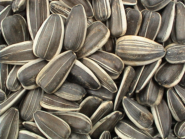 sunflower-seed.jpg