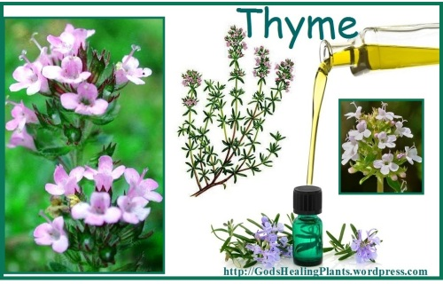 colage Thyme