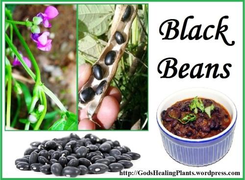Black beans CLWS