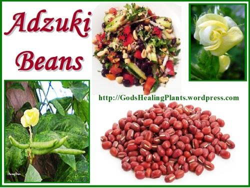 Adzuki beans benefits