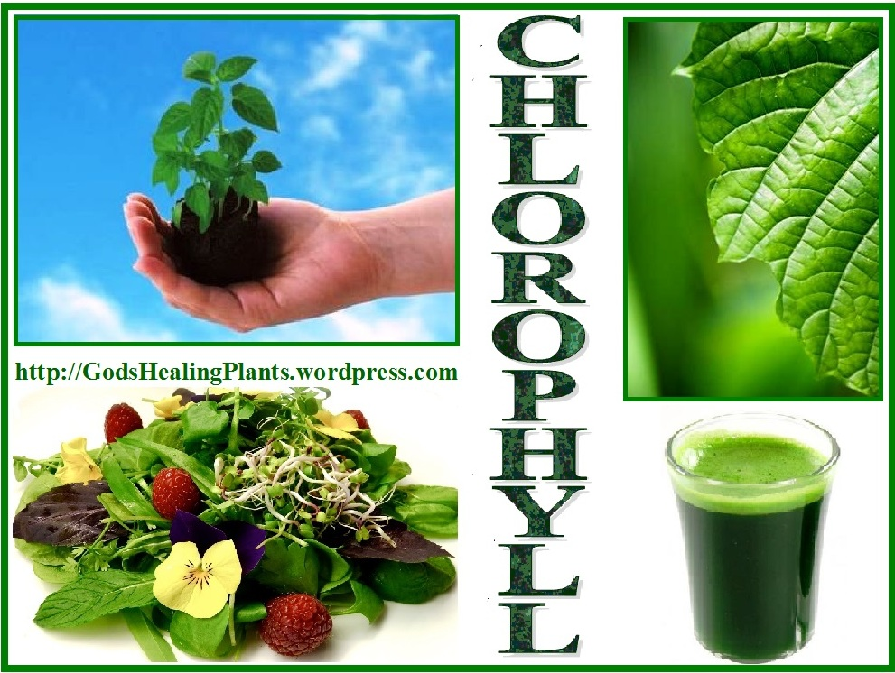 chlorophyll and your health | god's healing plants, Skeleton