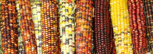 Corn colors