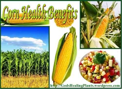 corn ghp ws