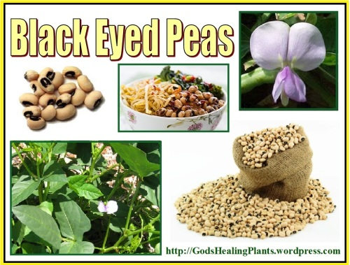 Black eyed peas GsHP