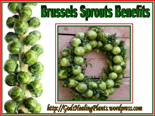 Brussel Sprouts GHP