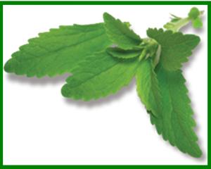 Stevia-right-corner
