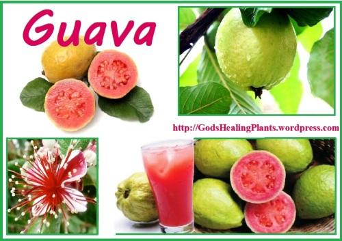 GHP - guava