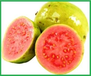guava_600x450