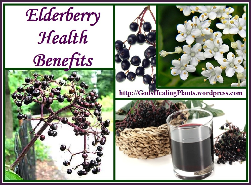 Investigation of Anthocyanin Profile of Four Elderberry ...