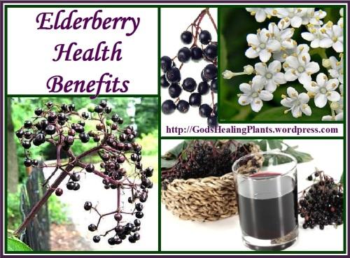 Elderberry GHP