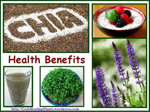 CHIA THE FOOD OF THE FUTURE