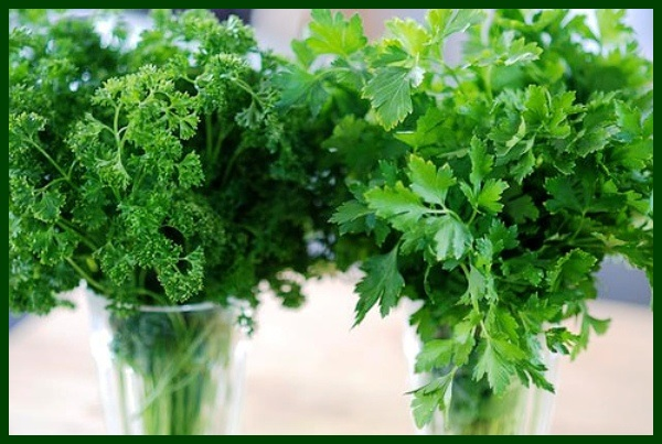 2 kinds of parsley 2