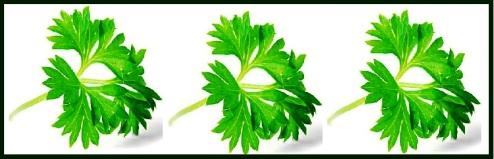 blank 3 parsleys