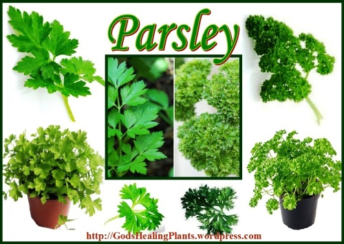 Parsley CL