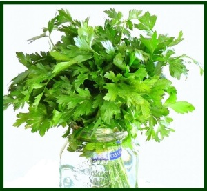 parsley in a jar