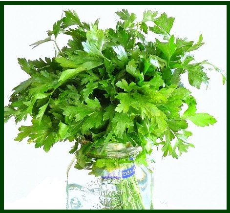 parsley in a jar