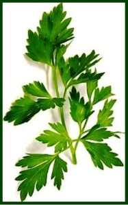 parsley10