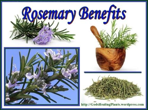 Rosemary CLG