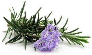Rosemary spice