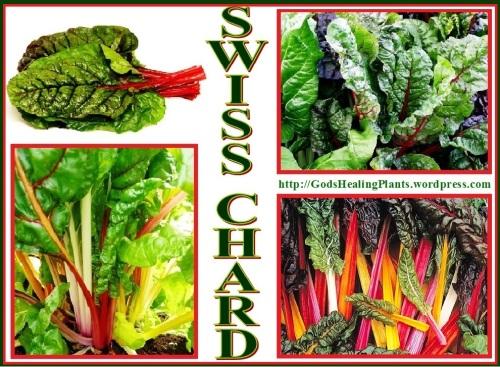 swiss chard cl