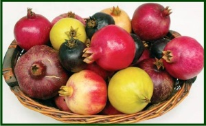 basket of pomegranates - different colors