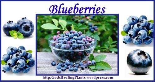 Blueberry GWTH