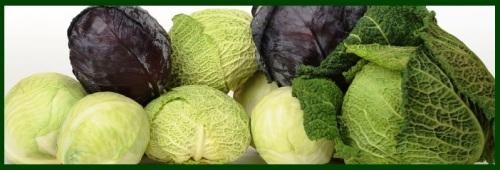 cabbage banner 2