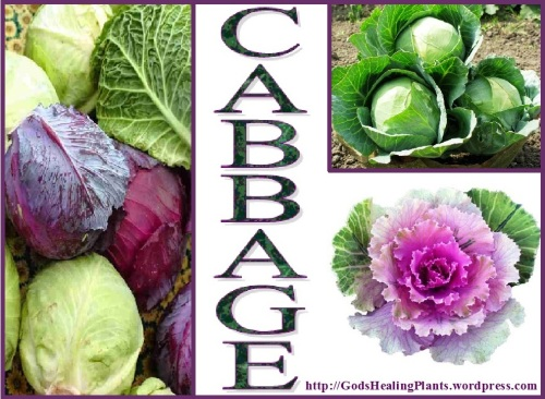 Cabbage CLWS