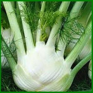 10-mature-fennel-bulb