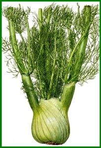 Fennel up