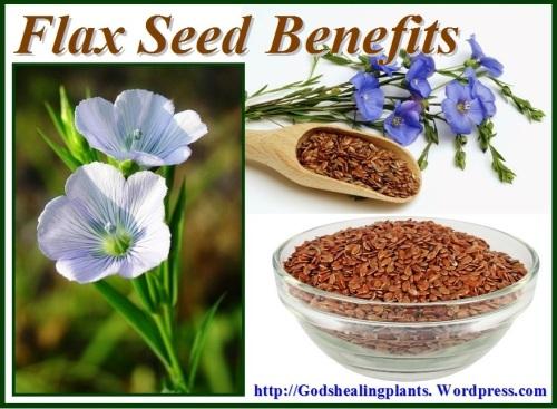 flax seed GHP