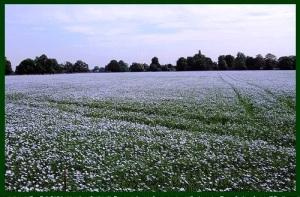Flax2