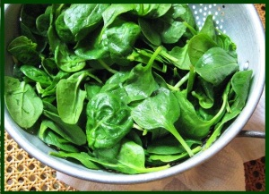 spinach-1-sa