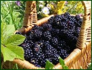 basket of mulberries
