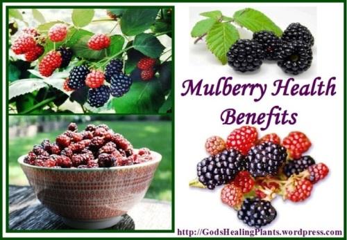 Mulberry GHP