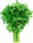 cilantro bunch 2