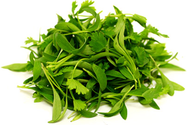 how to cut coriander leaves from plant