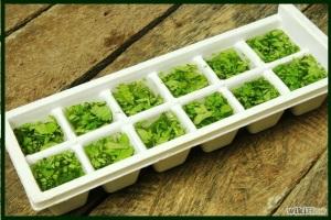 Freezing cilantro
