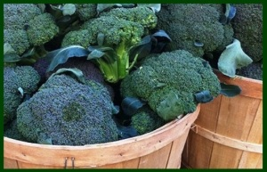 Selecting broccoli