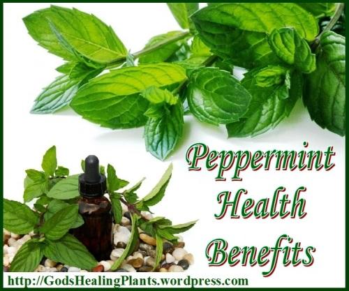 1 peppermint