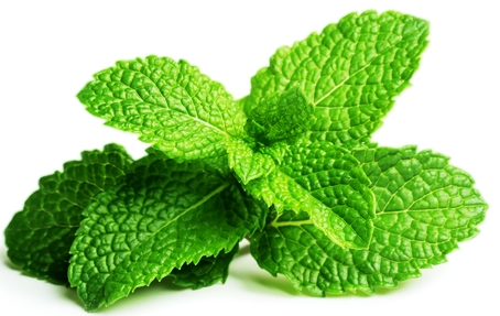 Image result for peppermint leaves