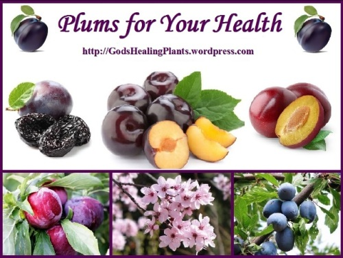 Plums collage GodsHP