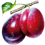 ws_Plums_1600x1200
