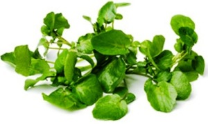 watercress-nutrition-facts