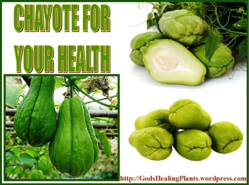 Chayote GHP